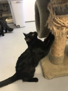 Kitten using her scratching post
